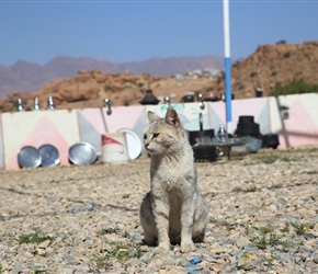 Cat at Painted Rocks