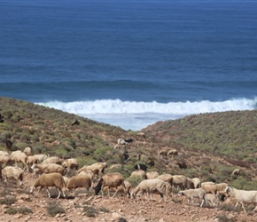 Sheep near Legzira Beach
