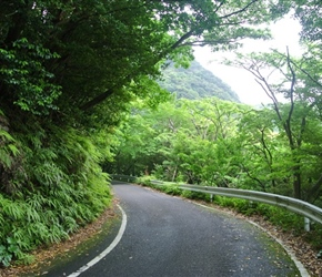 Road on Yakushima Island