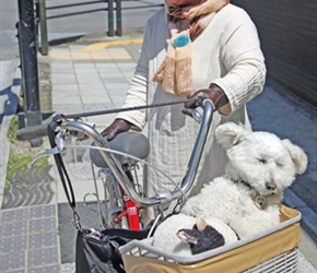 Dog in a basket in Yufuin