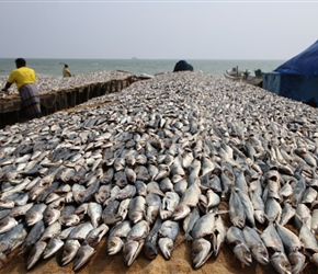 Fish drying south of Trincomalee