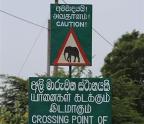 Elephant crossing point sign