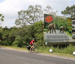 Cycle tourists beware of the Elephants