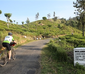 Ian passes the tea plantations in Sri Lanka