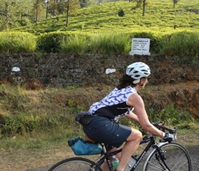 Christine passes the tea plantations in Sri Lanka