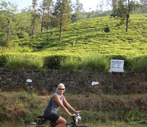 Chris passes the tea plantations in Sri Lanka