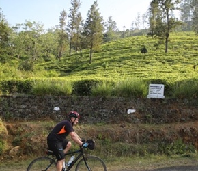 Phil Ellis passes the tea plantations