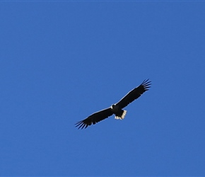 Sea Eagle on Anoya