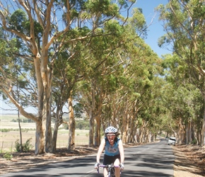 There wasn't a lot of shade in South Africa, but this was welcome as Lynne passes a line of eucalyptus trees