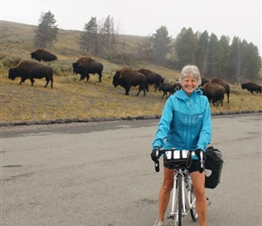 Valerie and Bison in the Haydon Valley