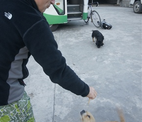 Neil feeding cake to the dogs at Yixiang Hotel