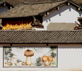 Lipu Village and mushroom mural. These murals would depict what the village did or grew