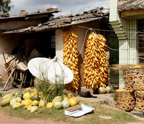 Satellite dish and vegetables. These large dishes are a common sight in remote areas