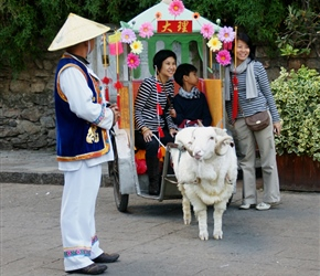 Sheep and carriage in Old Dali, it struck me that it was al about the picture in this tourist town