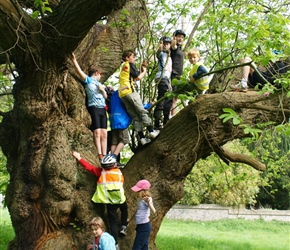 Tree climbing Tortworth