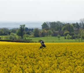 Through rape fields
