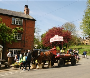 Shire Horses at Hook Norton