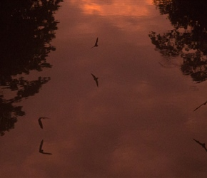 Bats at twilight