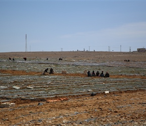 Farming is scarce in Southern Jordan, in this case watermelon planting